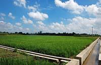 关于我司受邀参加安徽农垦旱改水项目工作座谈会